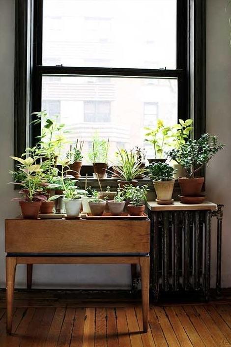indoorgarden4